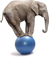 Elephant Balancing on Ball for Balance Awareness Week