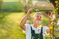 Man Gardening: Reminds Us that Nutrition and Exercise Can Help Our Balance and Dizziness Issues
