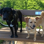 banner-lucy-park-featured-image