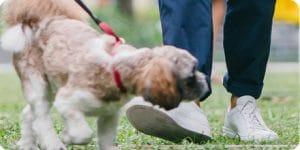 Dog Tripping Walker